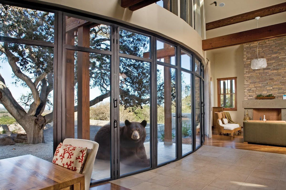 Bear Resistant Sound-Rated and Specialty Glass Walls